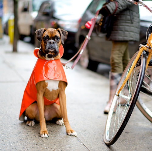 6 Questions With NYC Street Photographer, The Dogist. Topaz, Boxer