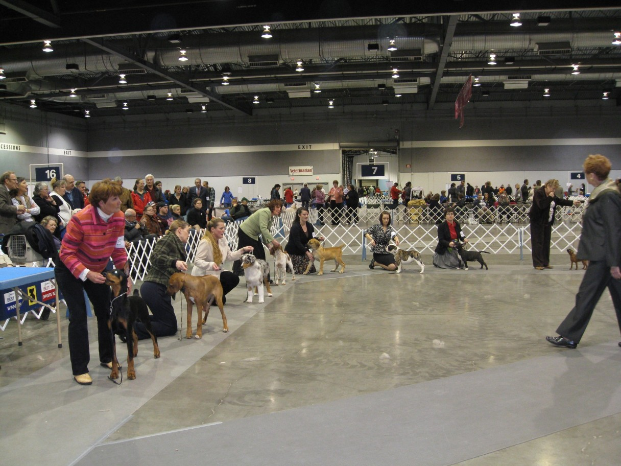 How to Count Points at AKC Dog Shows