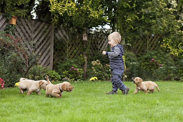 Puppy Socialization: Why, When, and How to Do It Right. Family puppy