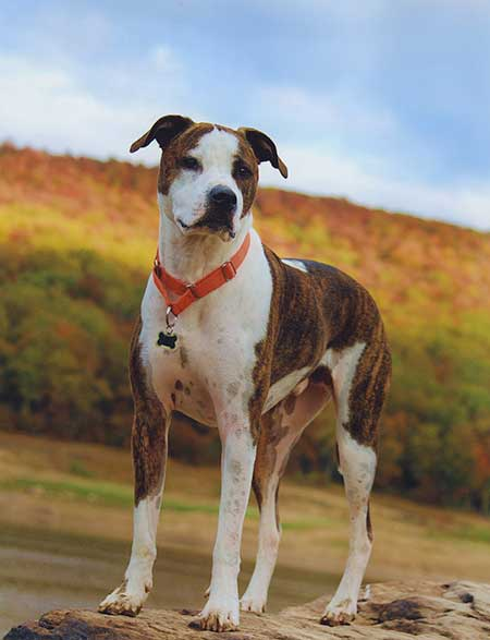 Autumn Dogs All American Beauty shot