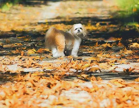 Autumn Dogs All American golden leaves