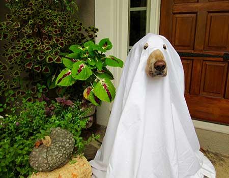 golden retriever halloween costume