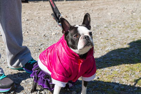 Bark for Life event in Westchester County