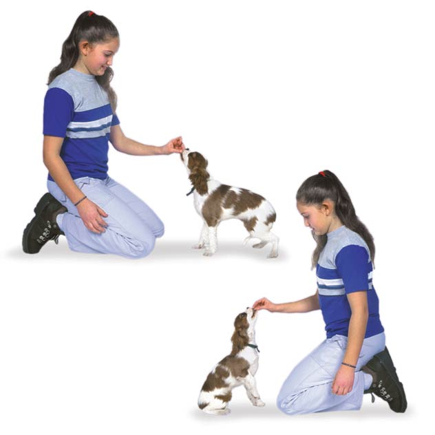 Image result for How to Teach a Puppy