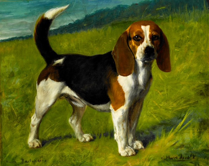 6 Ways of Looking at a Beagle – American Kennel Club