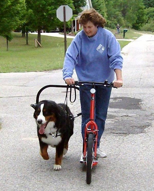 Dog-powered scootering