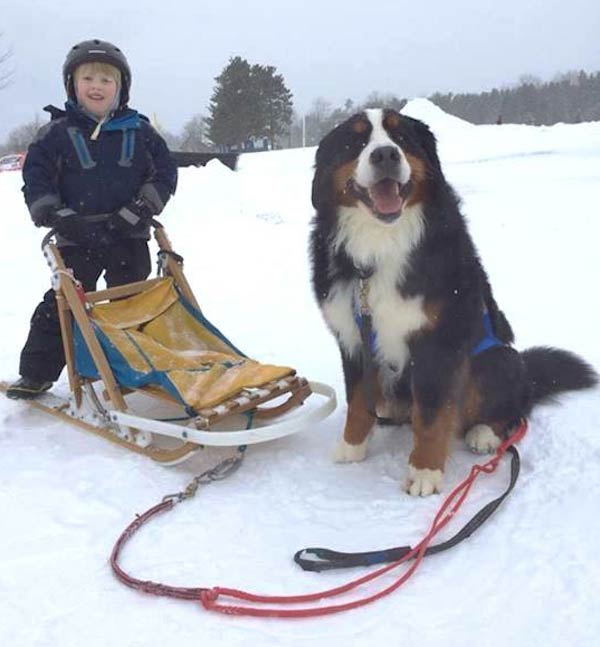 Otis enjoys sledding with young boy