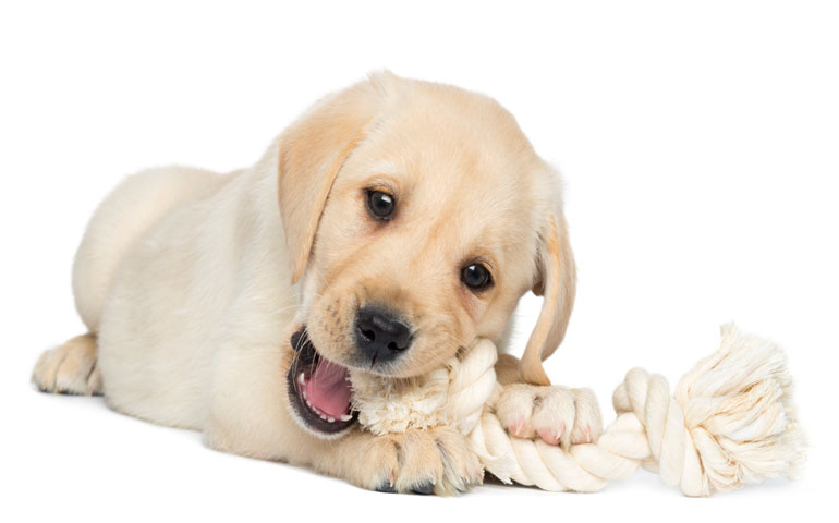 The Best (and Worst) Toys for Your Teething Puppy - thumbnail