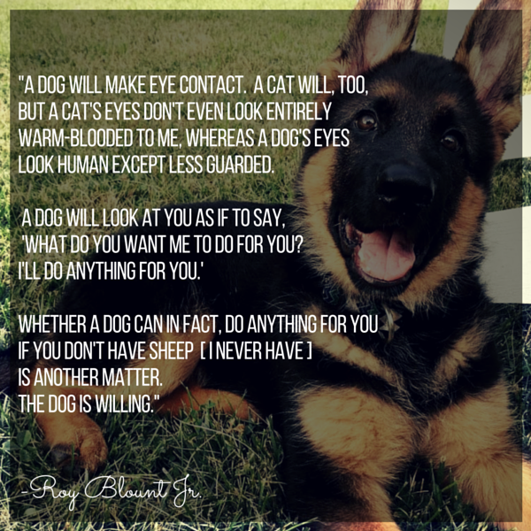 Dog Quotes We Rounded Up The Best Of The Best Mesmerizing Quotes About Dogs Love