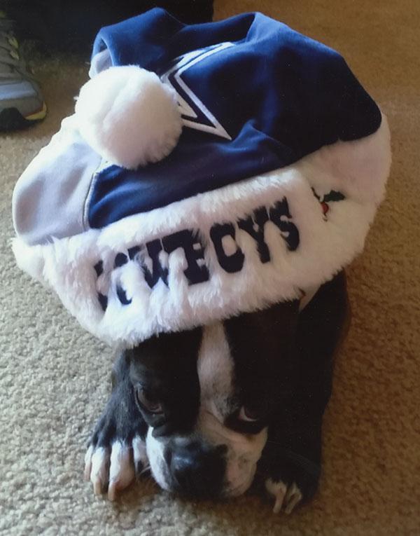 Boston Terrier Angela Frady