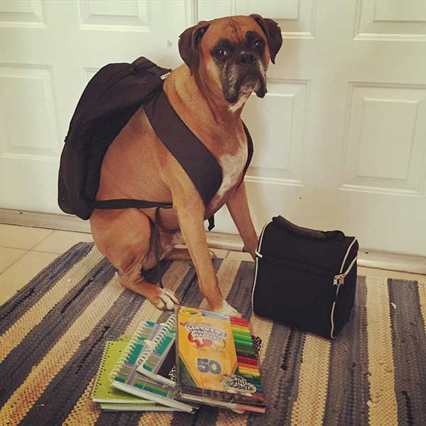 boxer backpack