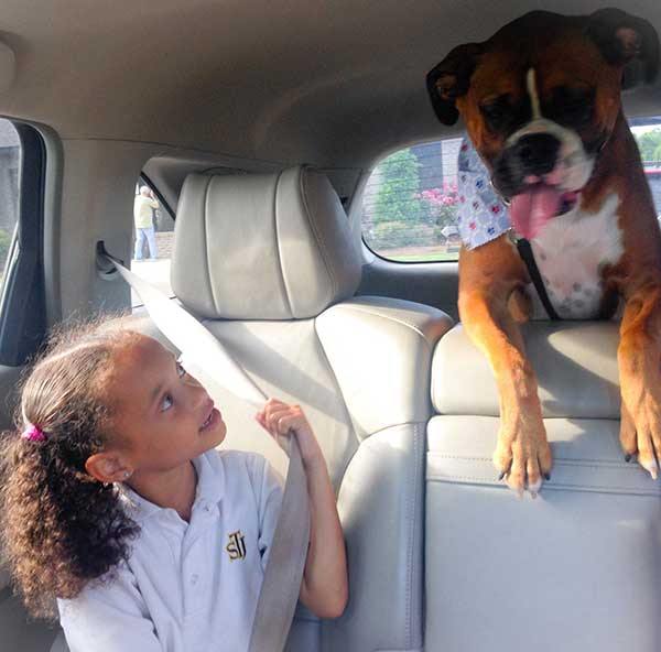 Boxer in car with girl