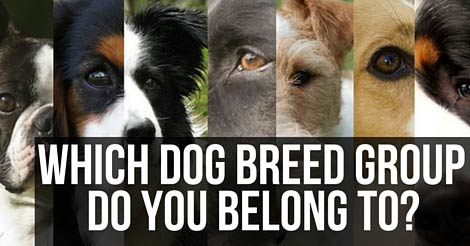 Sporting Dogs Are Active And Hy Go Lucky Hound Have Great Instincts Their Noses Won T Lead Them Wrong Non A Unique Bunch
