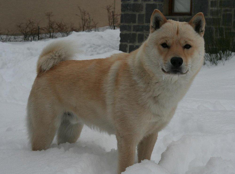 Akc Service Dog