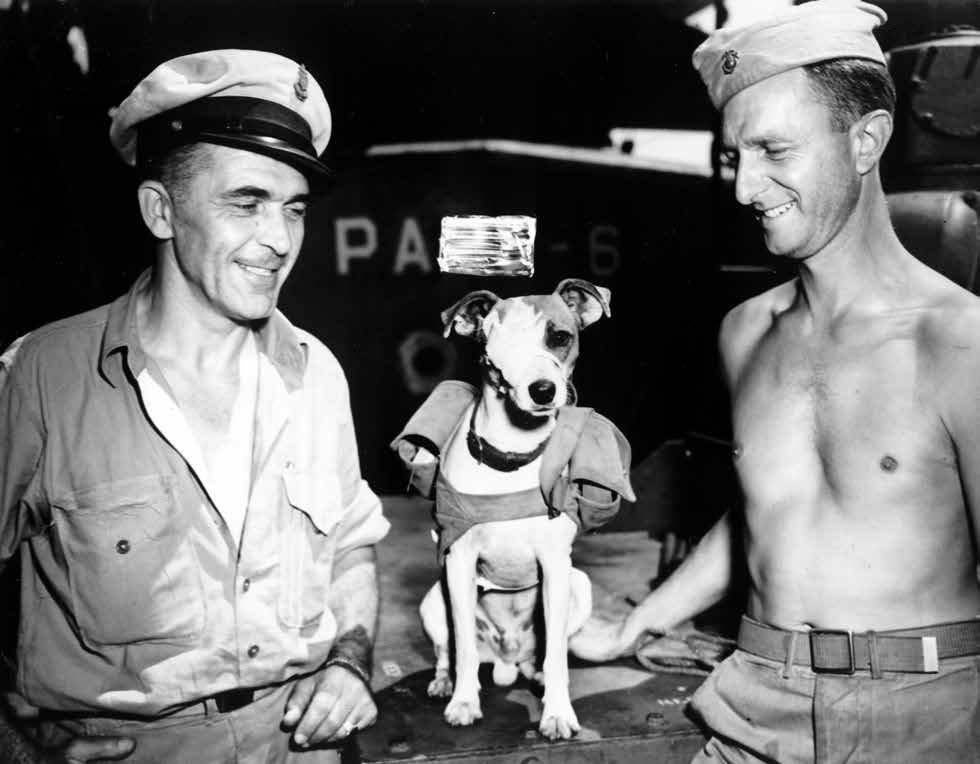 pooch with ww2 soliders
