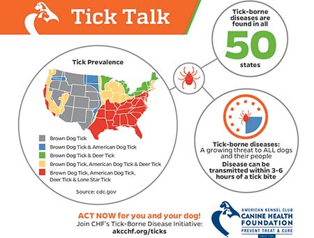 How to Remove a Tick from Your Dog – American Kennel Club