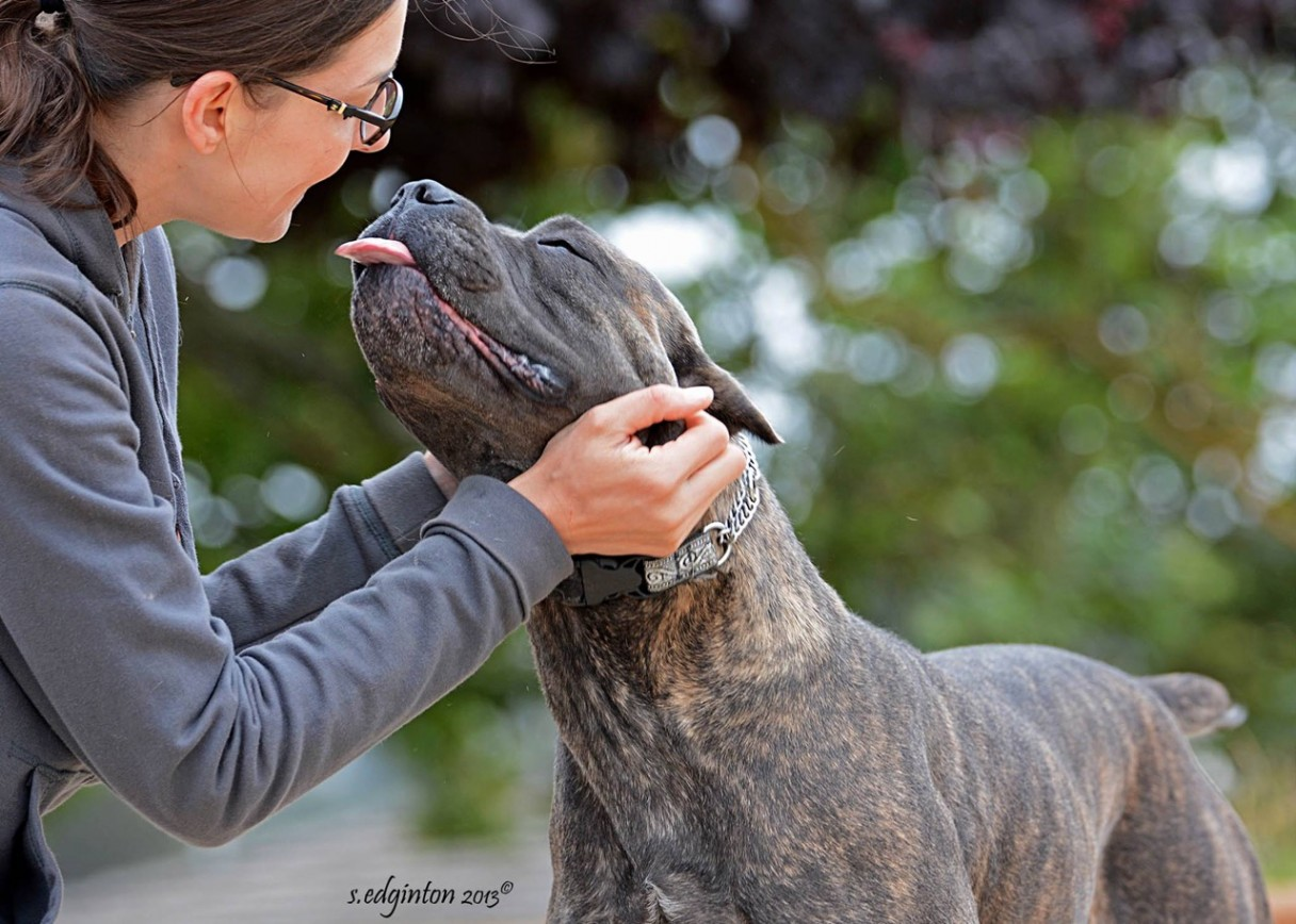 10 Things Only A Cane Corso Owner Would Understand American Kennel