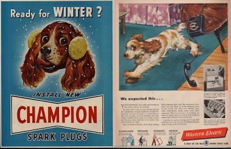 cocker spaniel in vintage ad