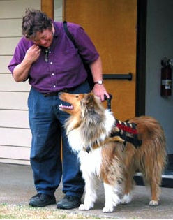 Collies service dog