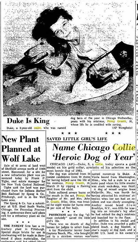 Newspaper clipping collie saves girl