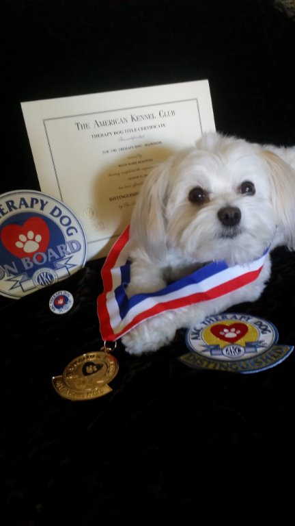 Meet A Therapy Dog Extraordinaire American Kennel Club