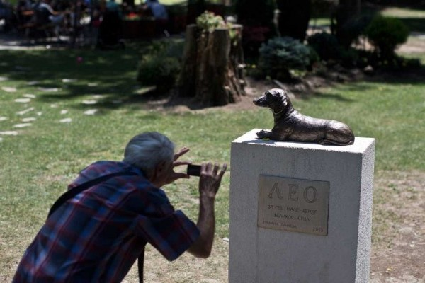 Man photographs a Dachshund