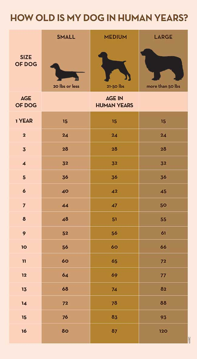 Dog years calculator infographic
