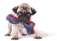 Top 100 Boy Dog Names — Which One Is Your Favorite?