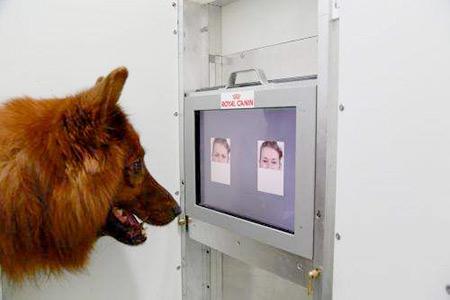 Dog study reading body language