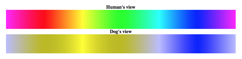 dog vision color spectrum
