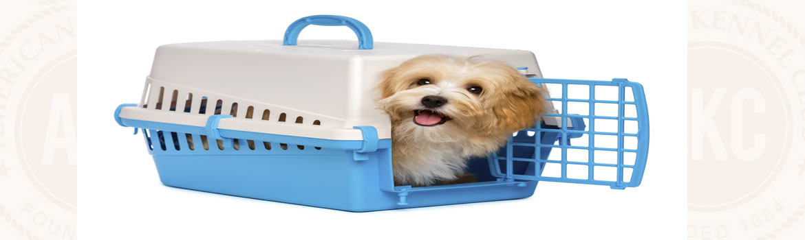 dog pooping in crate suddenly