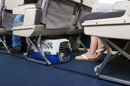 Dog in airplane cabin