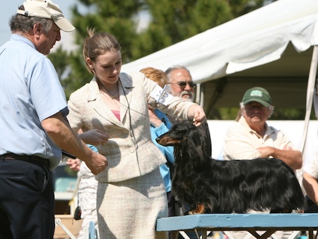 Dog show judges 1