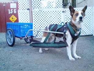 dog carting harnesses