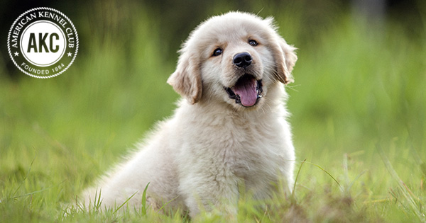 Dog Breeds - Types Of Dogs - American Kennel Club