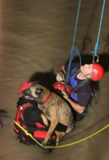 Fireman rescuing dog