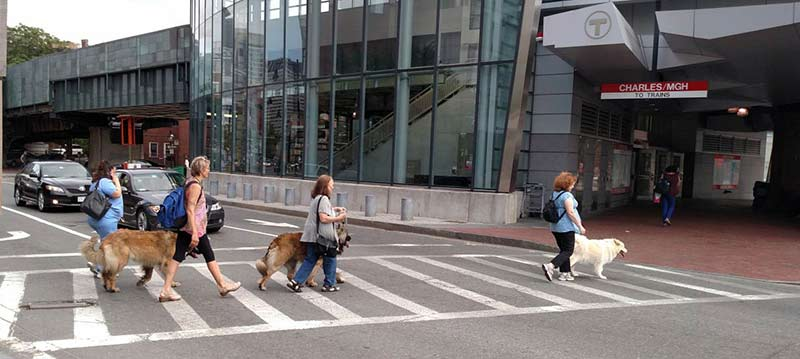 Giant Dogs in Boston 4