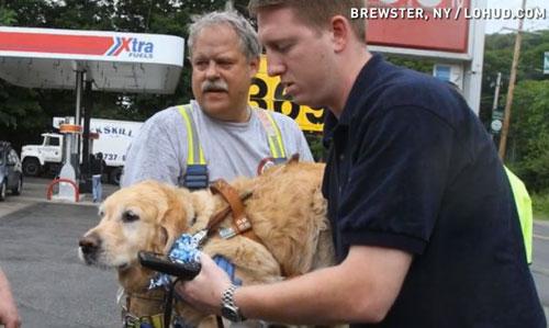 Bingo dog save woman from buss