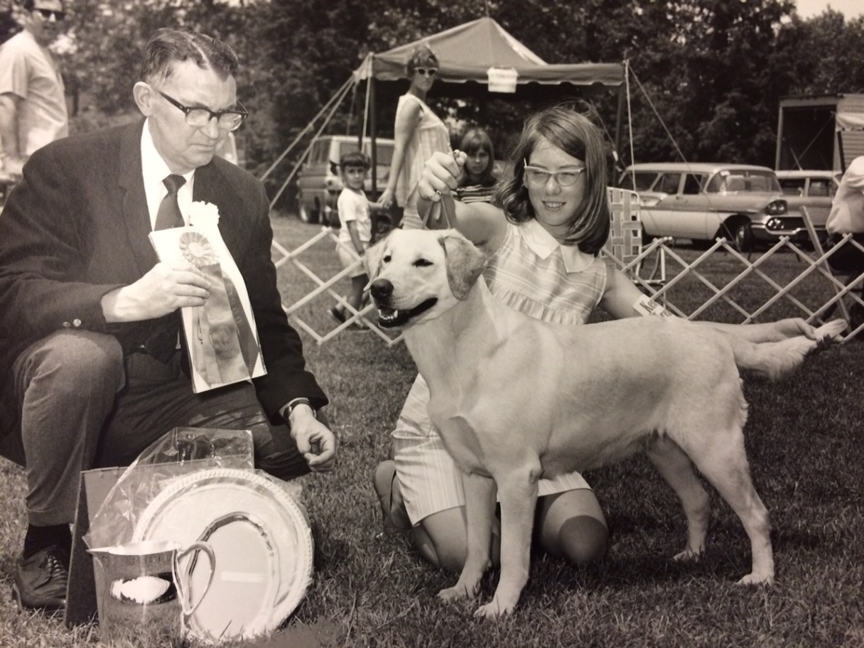 Labrador Retriever best in show 1968