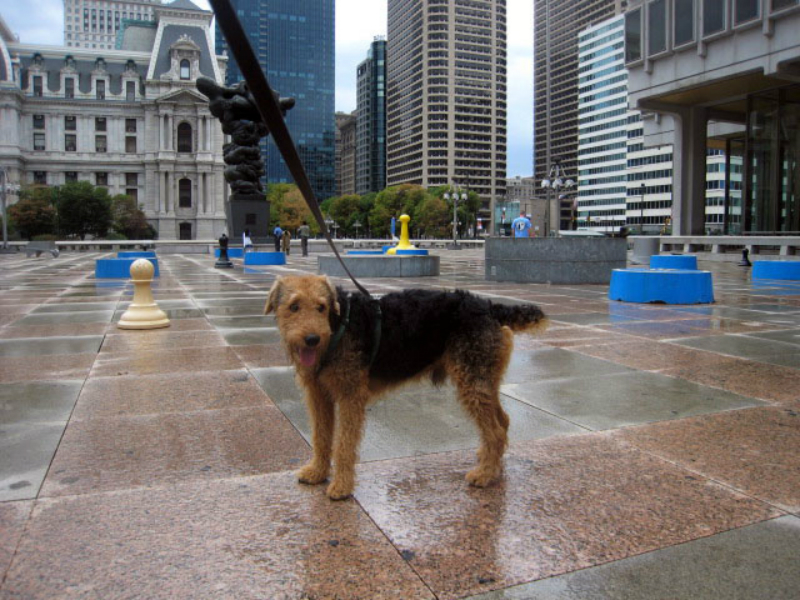 airedale terrier in philly