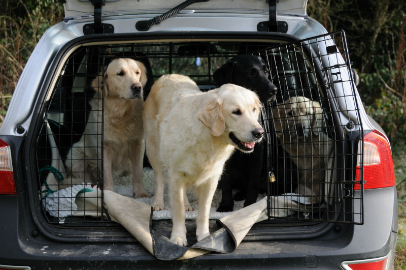 Dogs in car header