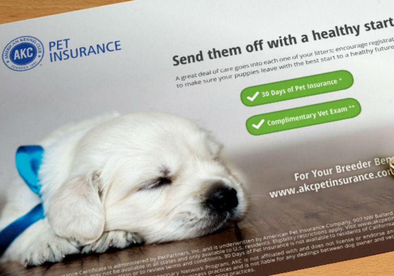 pet insurance puppy