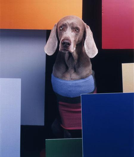 William Wegman's New Exhibit of photos of Weimaraners In the Bauhaus