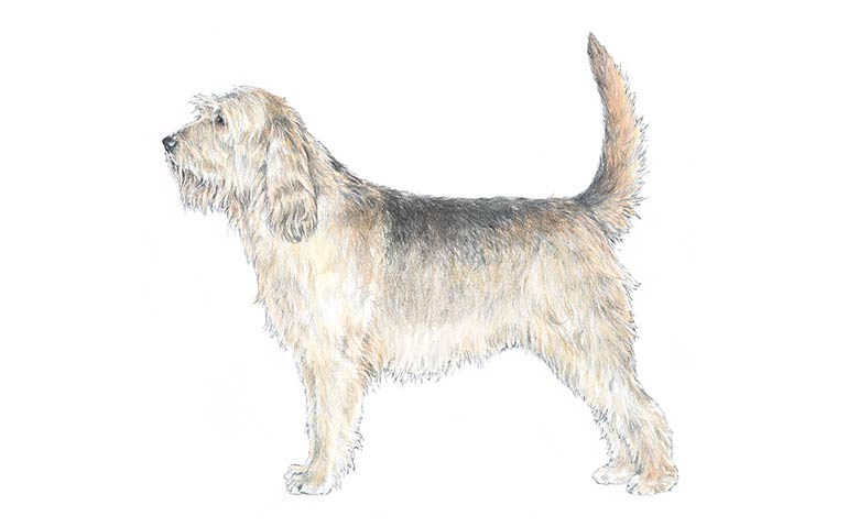 Instead Of A Designer Breed Consider The Undoodle The