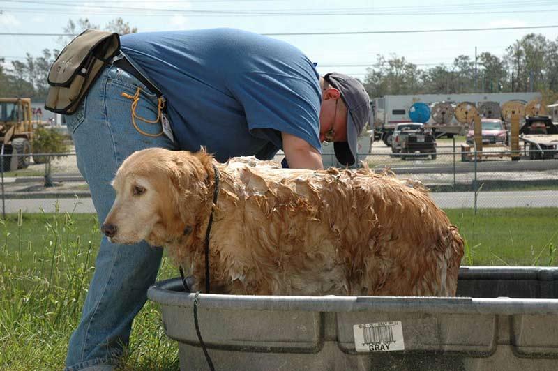 Katrina dog bath