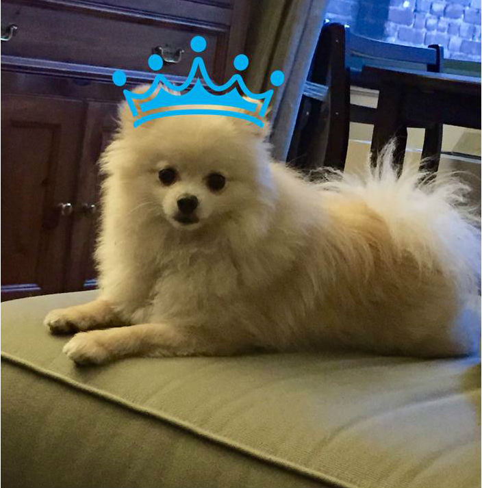 king fletcher the pomeranian