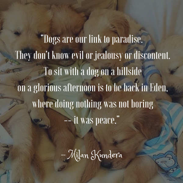 Dog Quotes We Rounded Up The Best Of The Best Simple Quotes About Dog Friendship