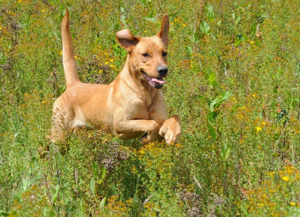 How do you diagnose canine illnesses?