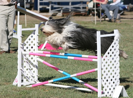 Labor Day events agility 2