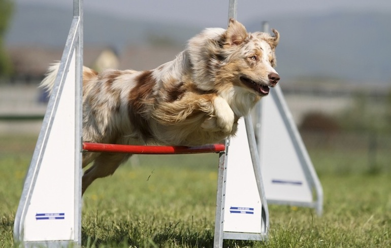 Dog Events Across The U S This Labor Day Weekend American
